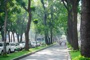 TP.HCM kiến nghị không đấu thầu chăm sóc, bảo dưỡng cây xanh