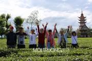 Gia Lai: Con đường thôn tuyệt đẹp giữa hàng thông cổ thụ 100 tuổi