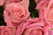 Valentine và những cách tỏ tình đặc biệt trên thế giới