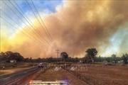 Australia: Hàng chục ngôi nhà bị phá hủy vì cháy rừng