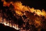 Diện tích rừng bị cháy tăng đột biến so với năm trước