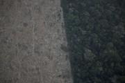 Các nước đưa ra tuyên bố bảo vệ rừng mưa Amazon