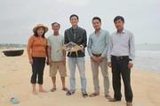 Quảng Trị: Phê duyệt kế hoạch bảo tồn rùa biển giai đoạn 2019-2025