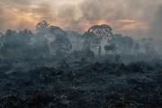 Cháy rừng khiến không khí Indonesia ô nhiễm nhất trong 4 năm qua