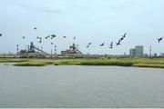 Mục sở thị công viên sinh thái trong nhà máy Formosa Hà Tĩnh