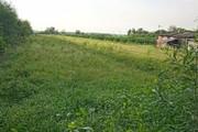 TP.HCM xin chuyển đổi gần 400ha đất nhiễm phèn để phát triển đô thị