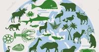 Nhiều quốc gia cam kết ngăn chặn mất đa dạng sinh học của Trái đất