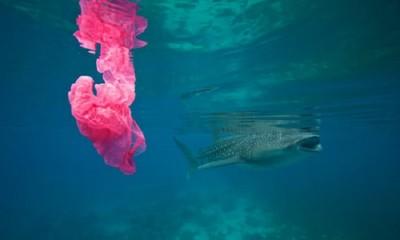 Cảnh báo nhựa dùng một lần gây ảnh hưởng nghiêm trọng đến BĐKH