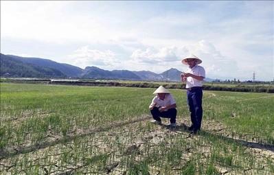 Thủ tướng yêu cầu cấp bách đối phó với hạn hán ở miền Trung