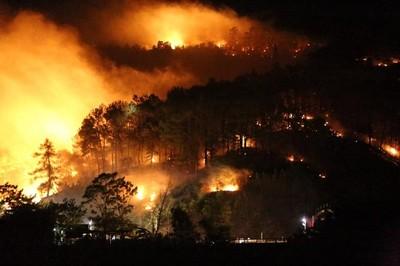 Diện tích rừng bị cháy gấp 7,6 lần cùng kỳ năm trước