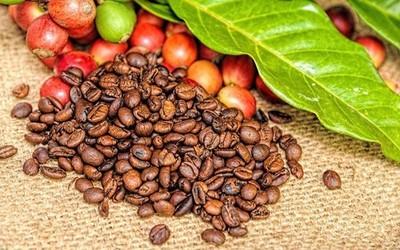 Giá cà phê hôm nay ngày 2/10: Giảm nhẹ 200 đồng/kg