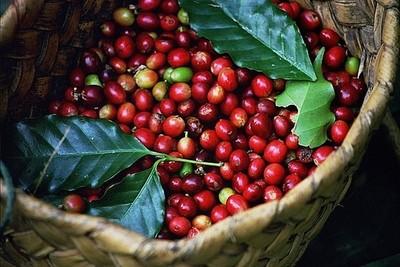 Giá cà phê hôm nay 27/7: Đi ngang sau phiên tăng mạnh