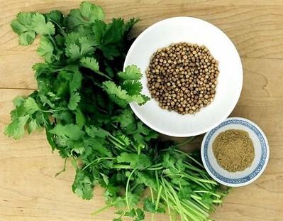 Thực phẩm từ thiên nhiên: Rau mùi-Cây rau, cây thuốc của người Việt