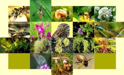 Giải pháp bảo tồn đa dạng sinh học ở Hà Nội