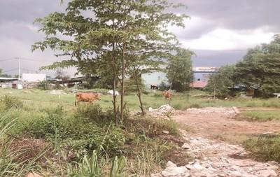 TP.HCM: Lừa bán đất cho nhiều người, chiếm đoạt tiền tỷ